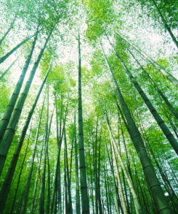 renewable bamboo products
